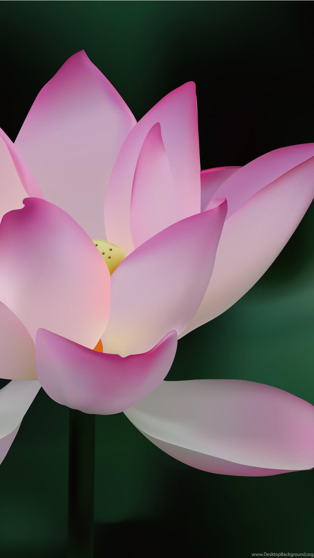 Lotus Flower Backgrounds Vector Download Free Vector Desktop