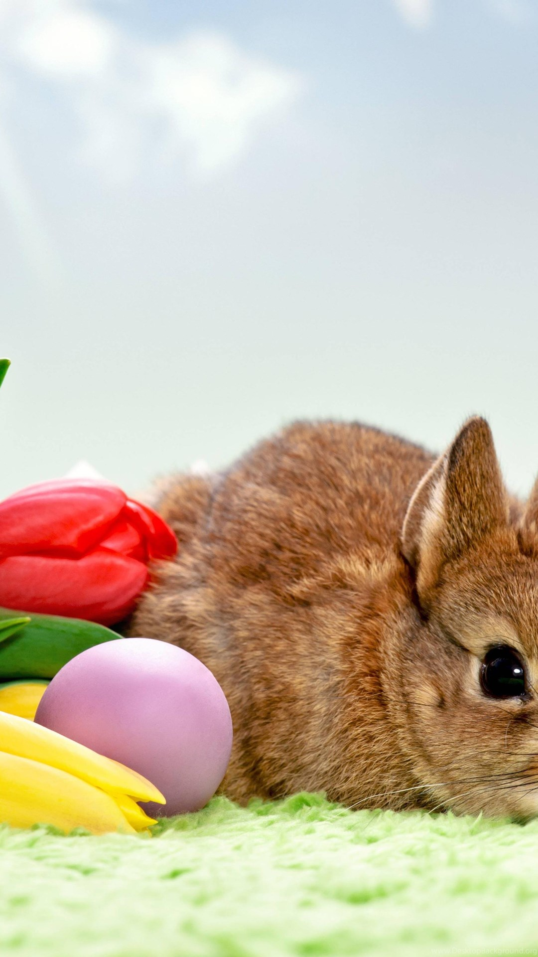 кролик с тюльпанами  № 1144607 бесплатно