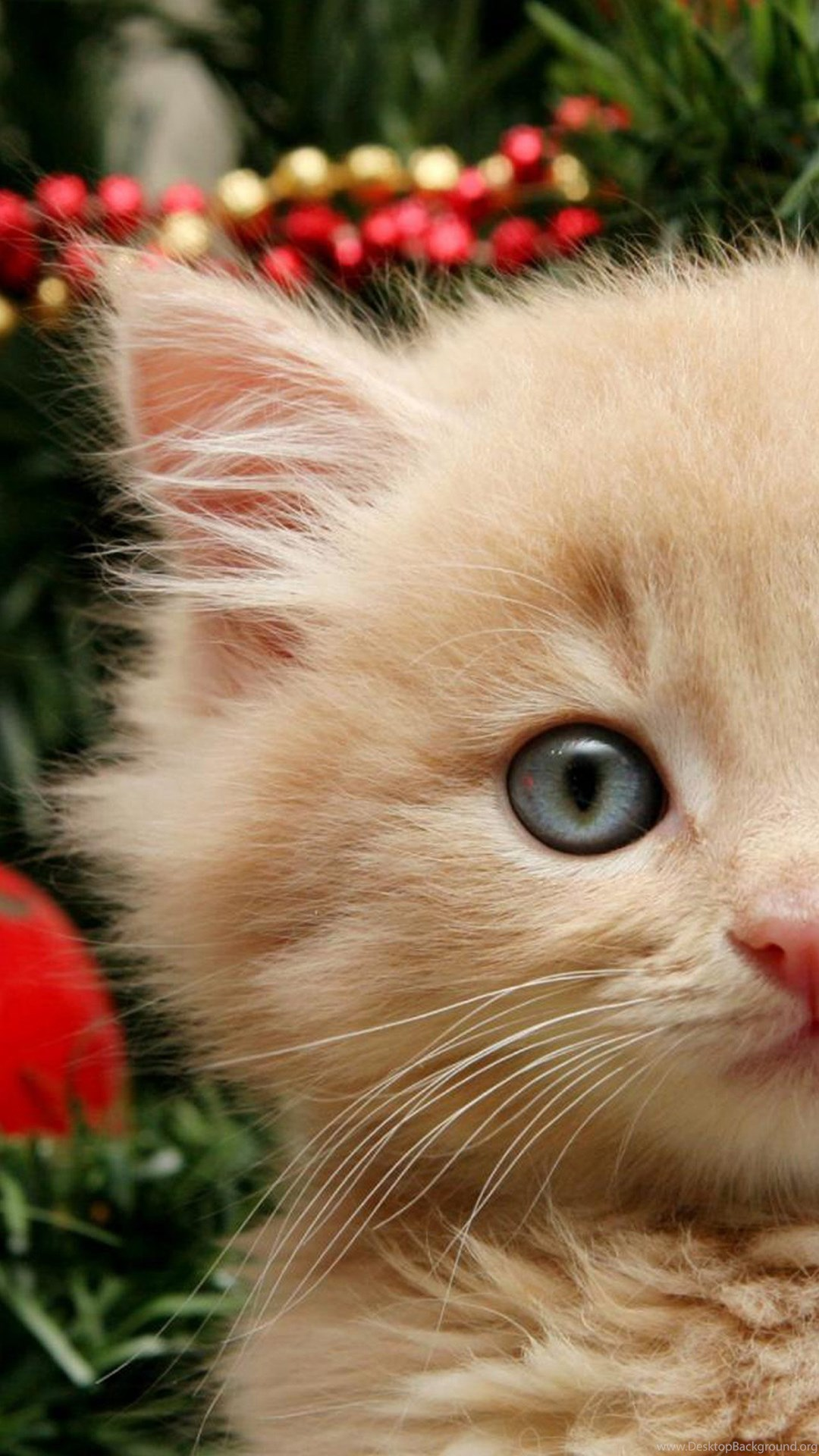 Curious Christmas Cat Wallpapers For Galaxy S6 Jpg Desktop Background
