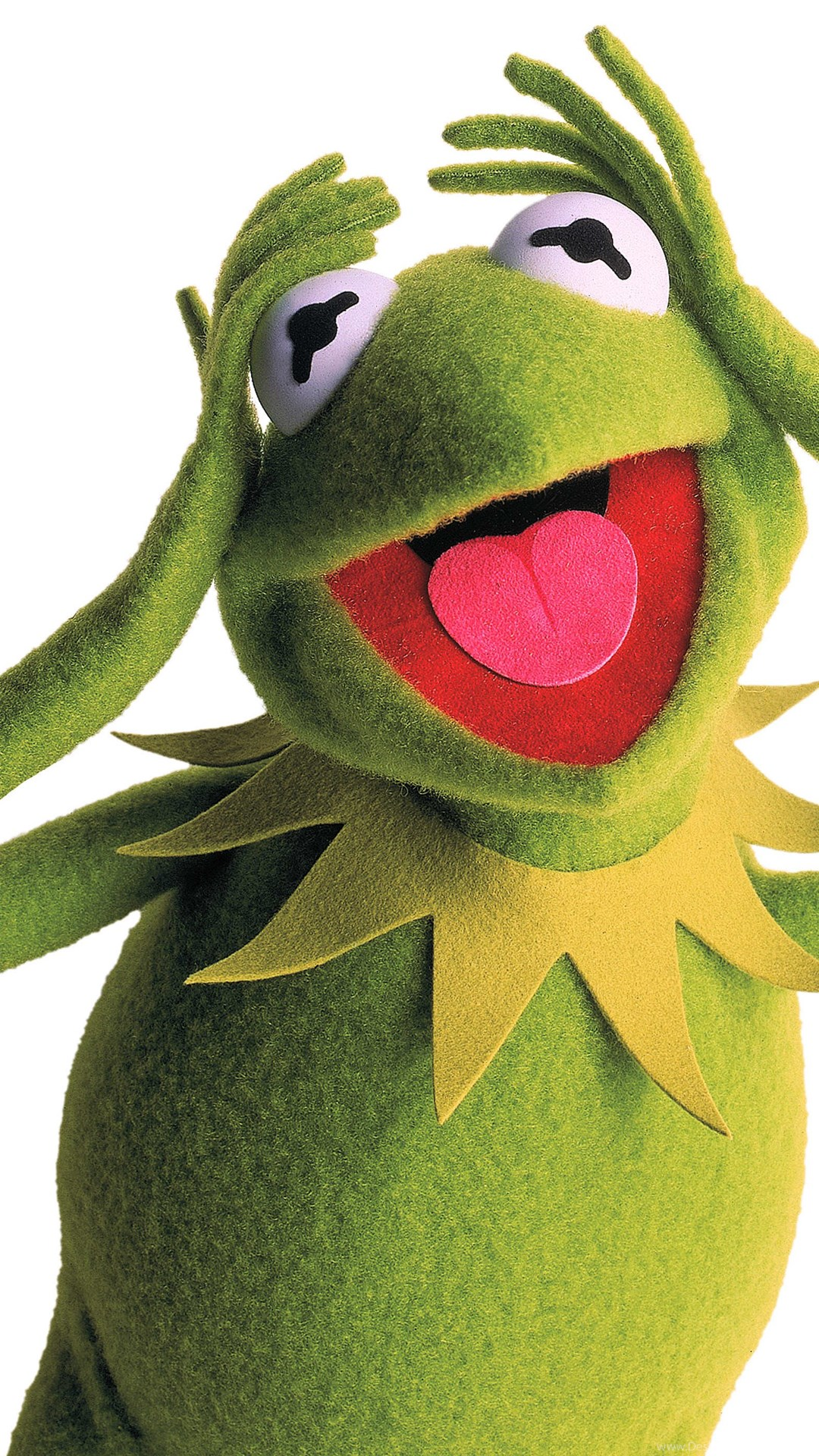 Kermit Wallpaper 10.jpg Desktop Background