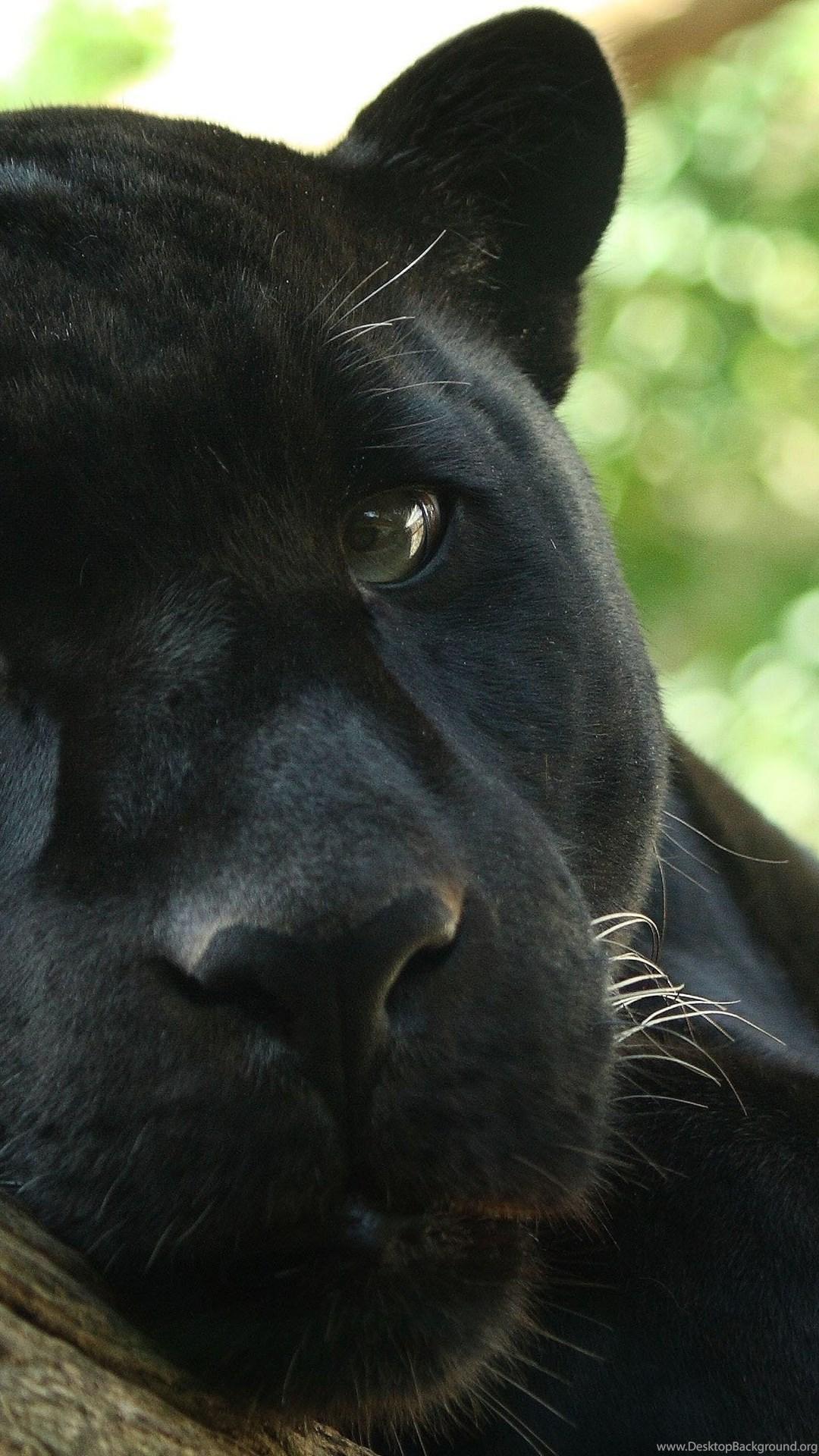 94 Black Panther Hd Wallpapers Desktop Background