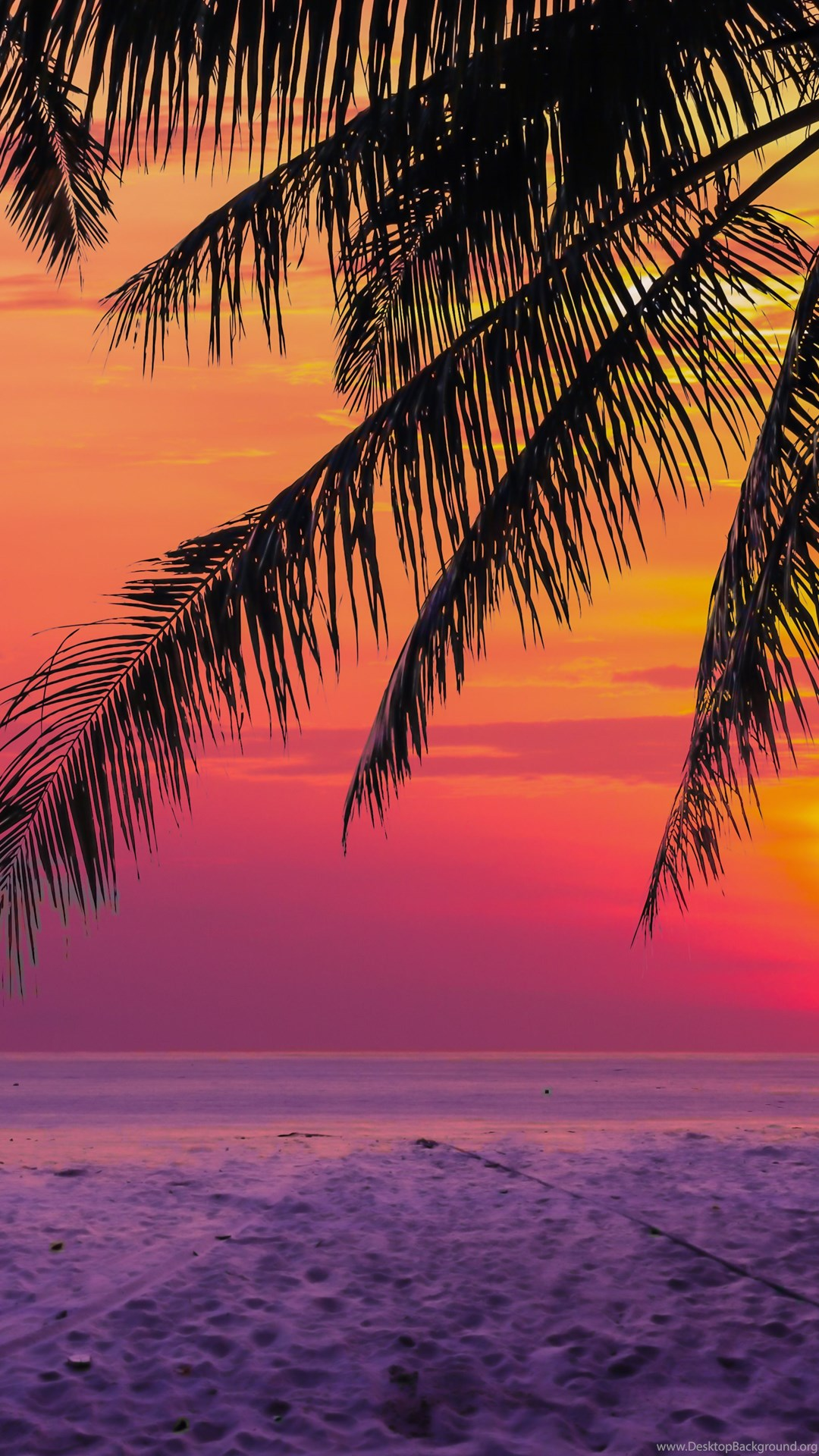 Tropical Sunset Desktop Background