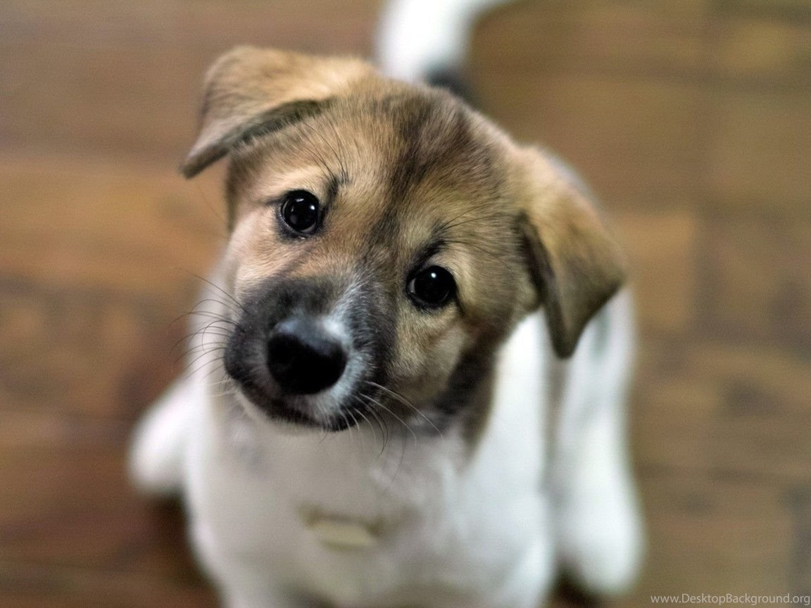 Download Cute Puppy Wallpapers For Samsung Galaxy Tab Desktop Background