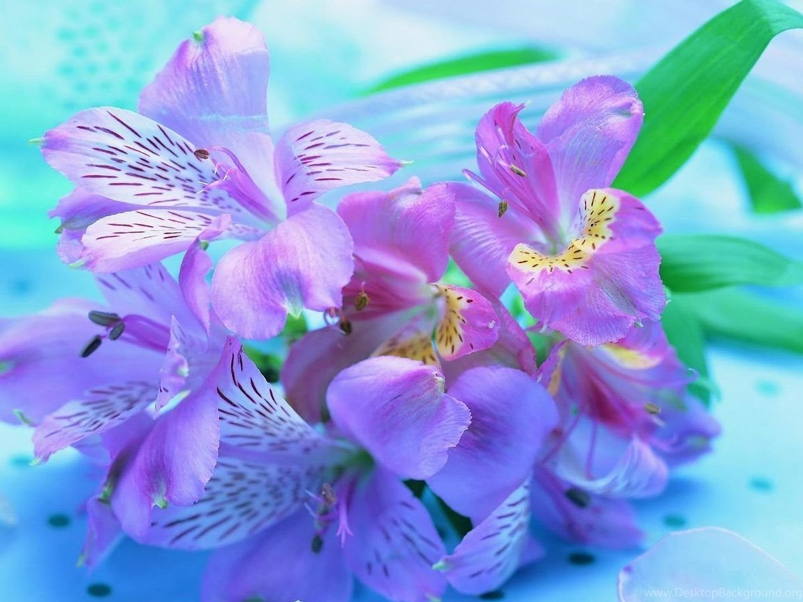 Download Freesia Flower Wallpapers For Samsung Galaxy Tab Desktop Background