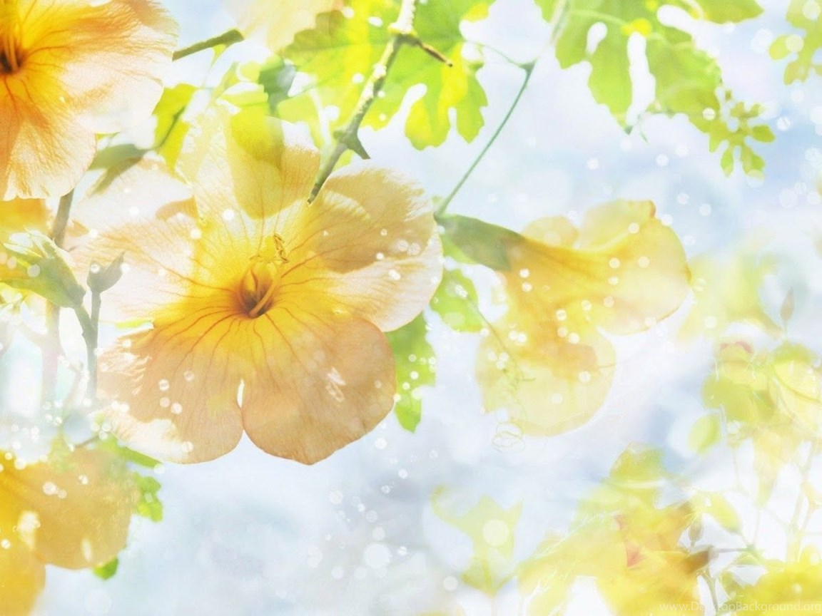 Top Yellow Flowers Hd Wallpaper Images For Pinterest Desktop Background