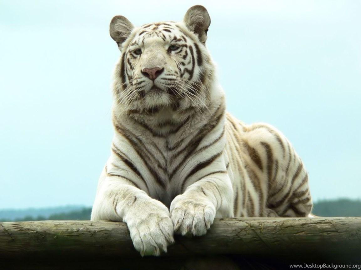 Поздравления с днем рождения тиграну 8