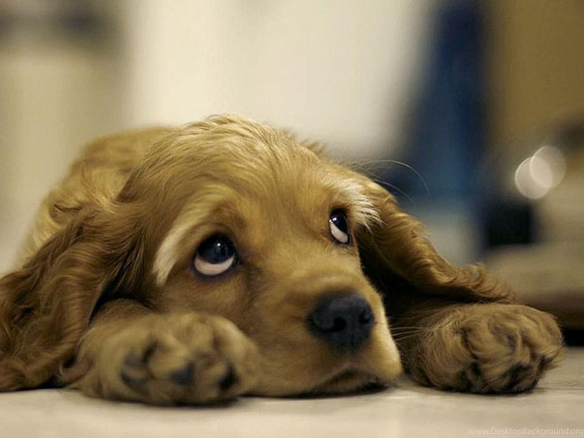 лучшие кадры щенок просит прощения картинки свежий