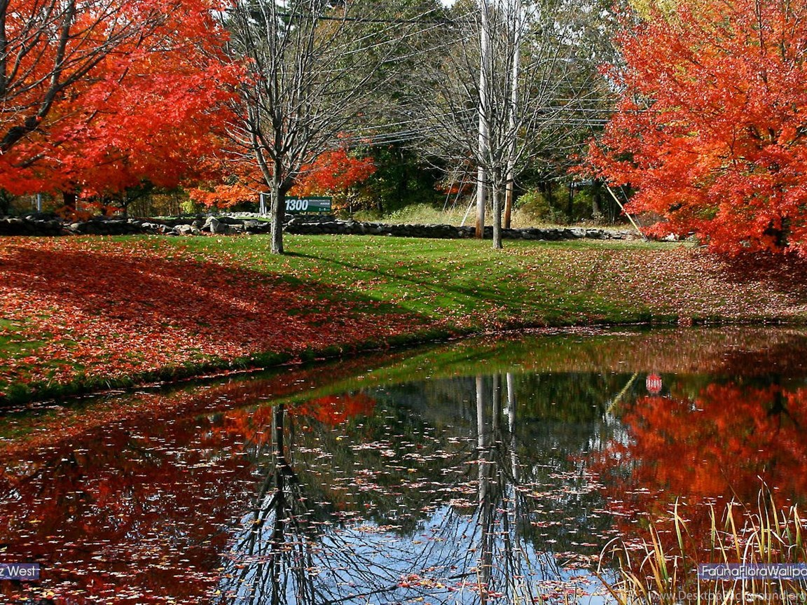 Fauna Flora Wallpapers 1440 X 900 Autumn In New England Desktop Background