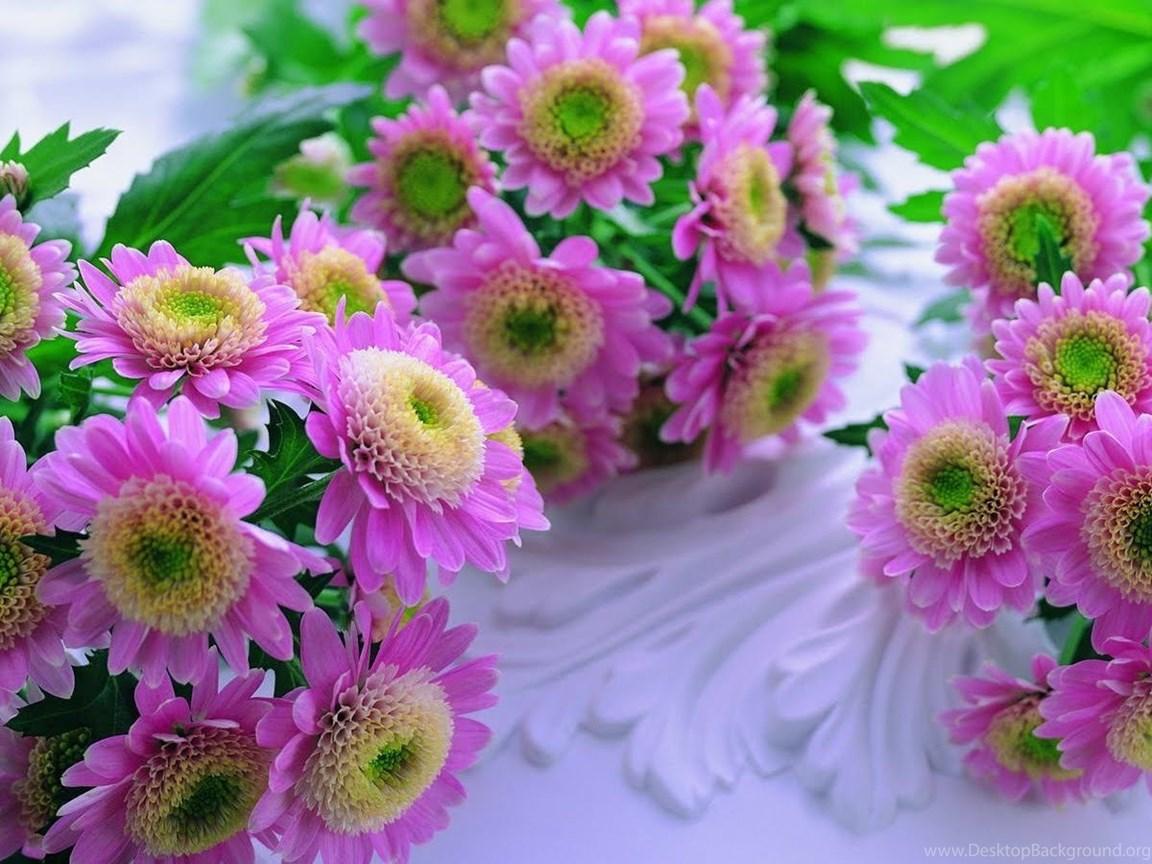 Hd Wallpapers Free Colors Full Flowers Nature Flower Beautiful Desktop Background
