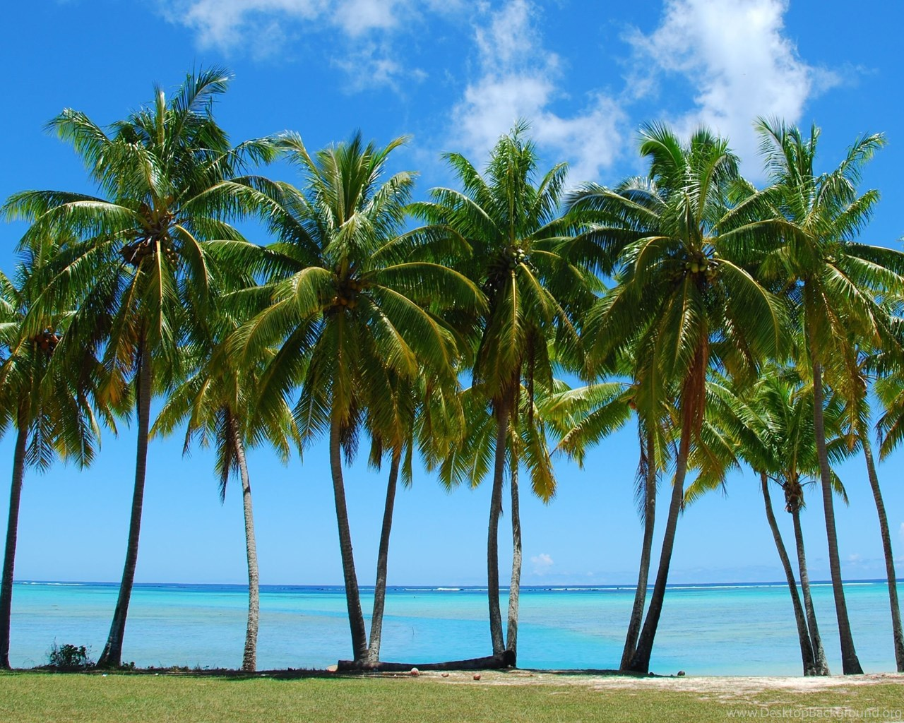 Tumblr Palm Tree Backgrounds Picture Gallery Desktop