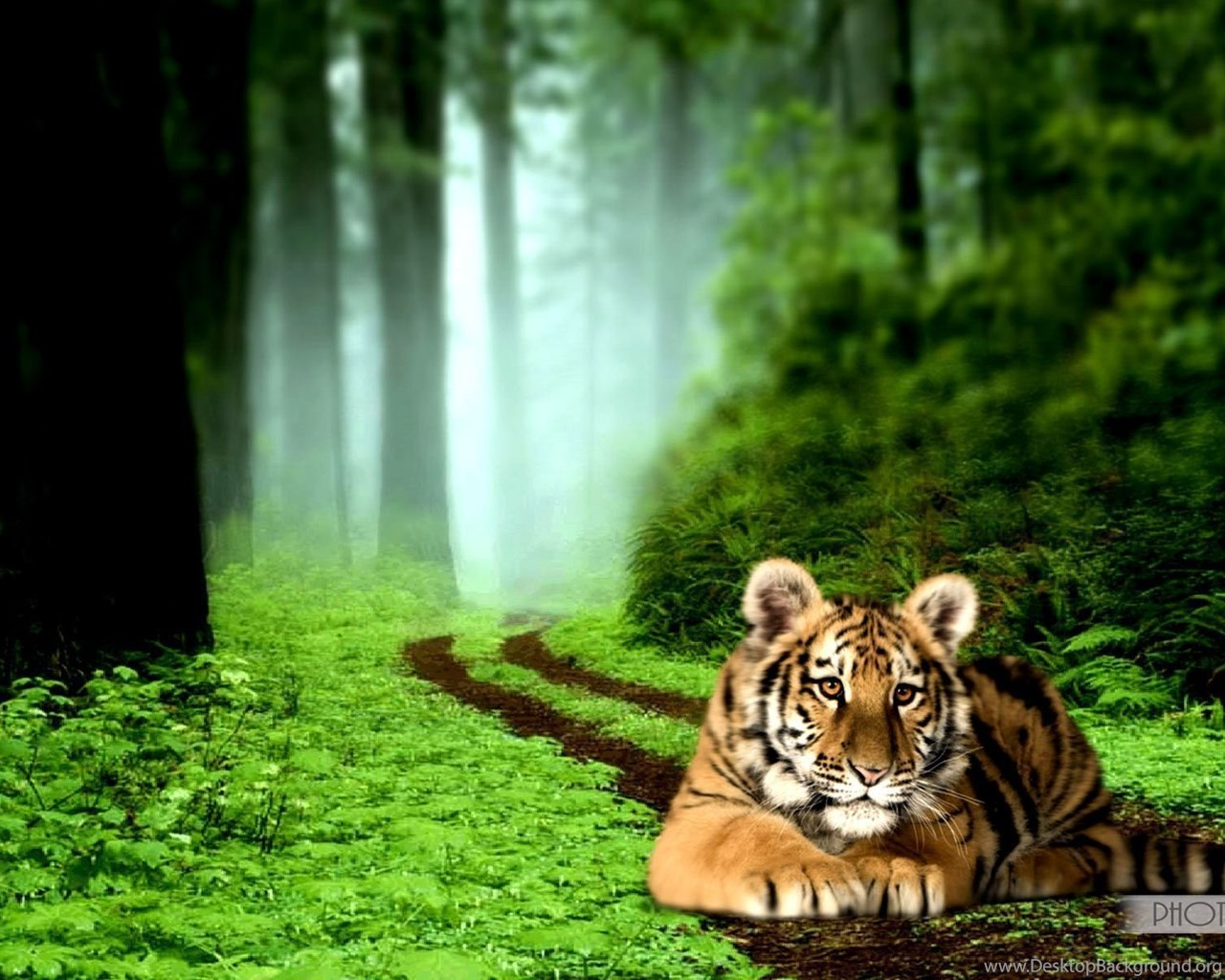 tiger high resolution backgrounds cool / wallpapers tiger 10821 high