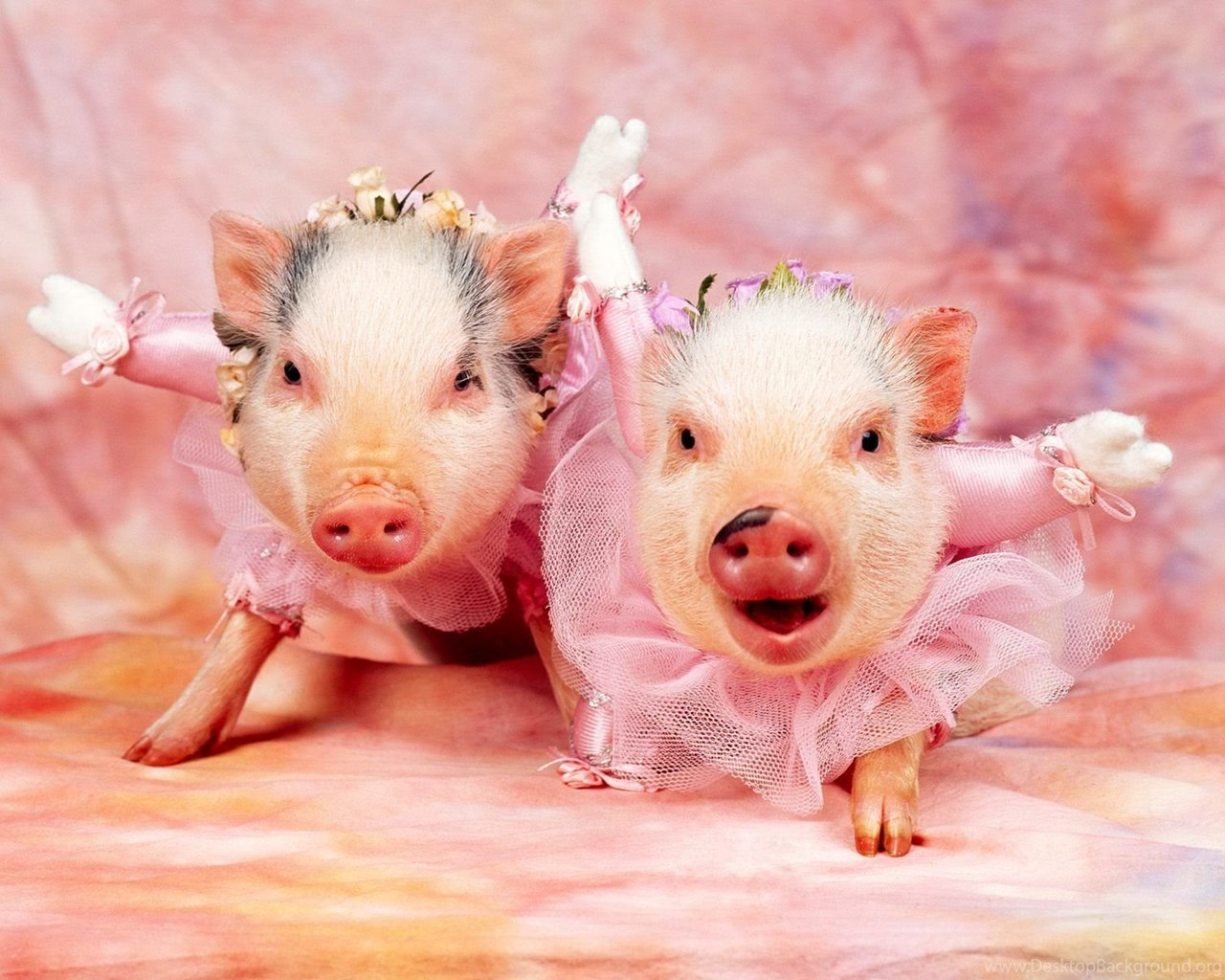 pictures of pigs hd wallpapers lovely desktop background