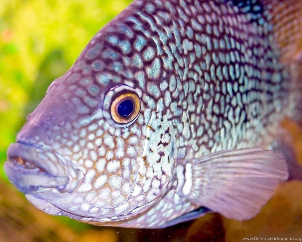 1920x1080 Aquarium Fish Hd Wallpapers Desktop Background