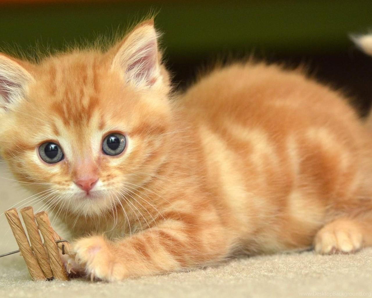 Cute Kitten Jigsaw Puzzle - m Cute kitten photo gallery
