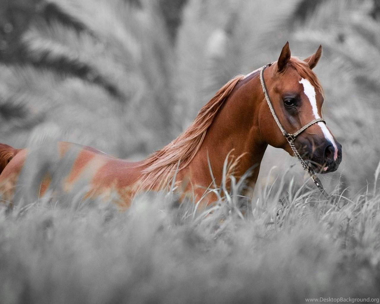 Horse Wallpapers Hdjpg Desktop Background