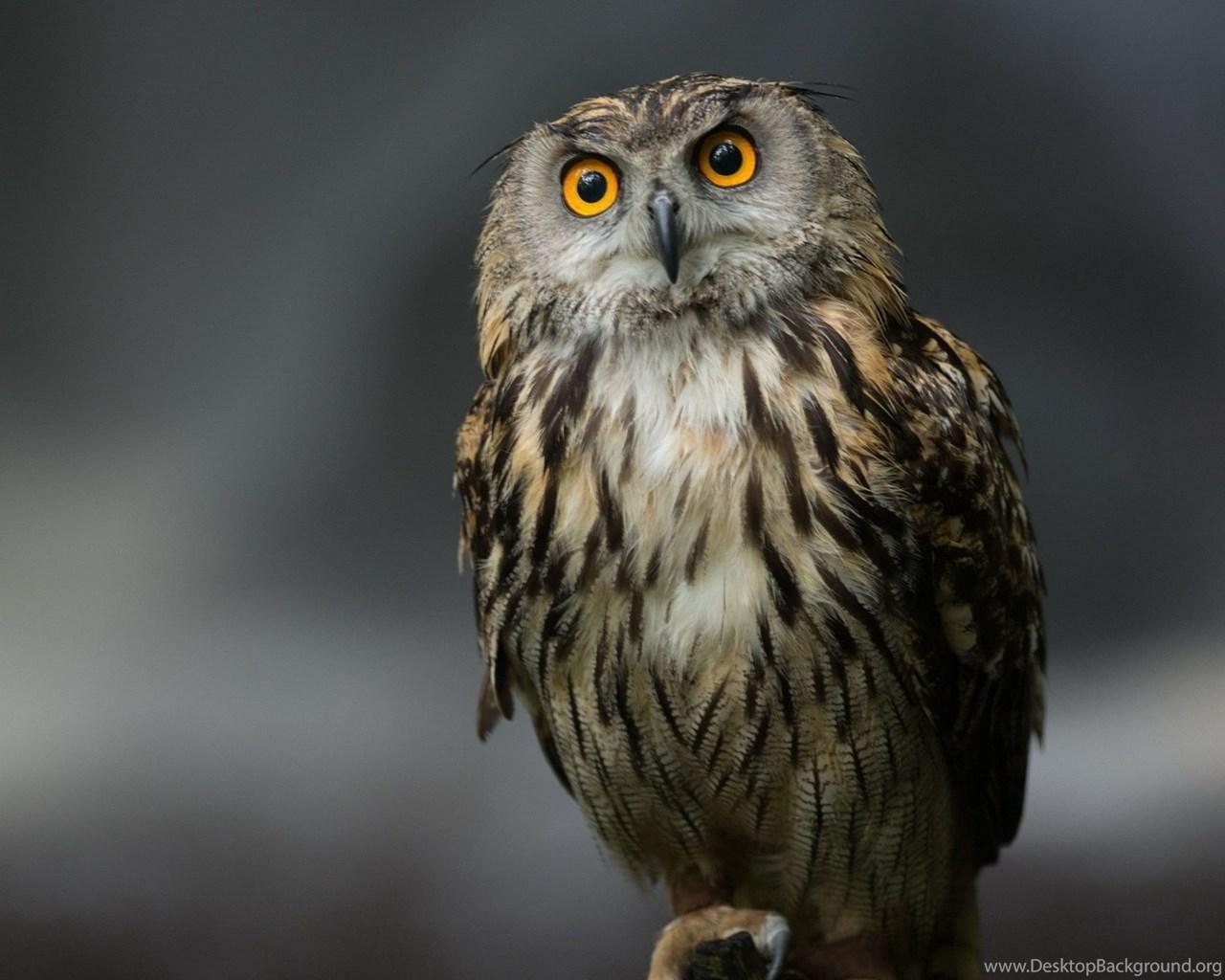 download wallpapers 3840x2160 owl bird predator sitting
