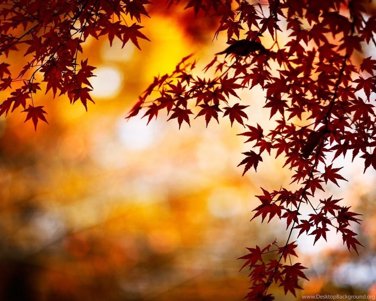Autumn Season Hd Wallpapers Desktop Background