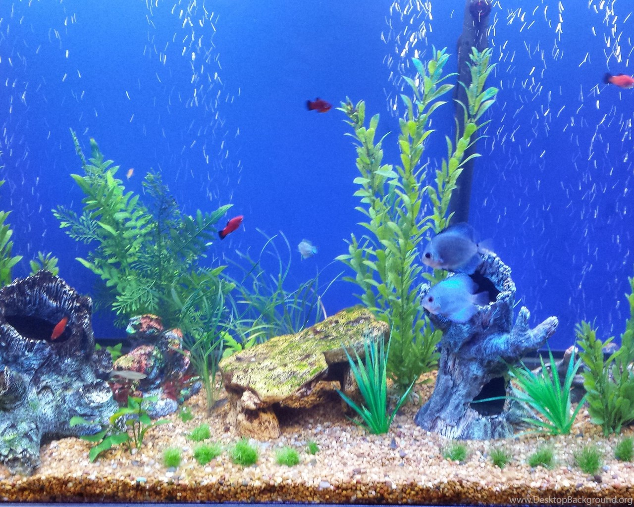 Concept Design Home Fish Tank Backgrounds Pictures Desktop Background