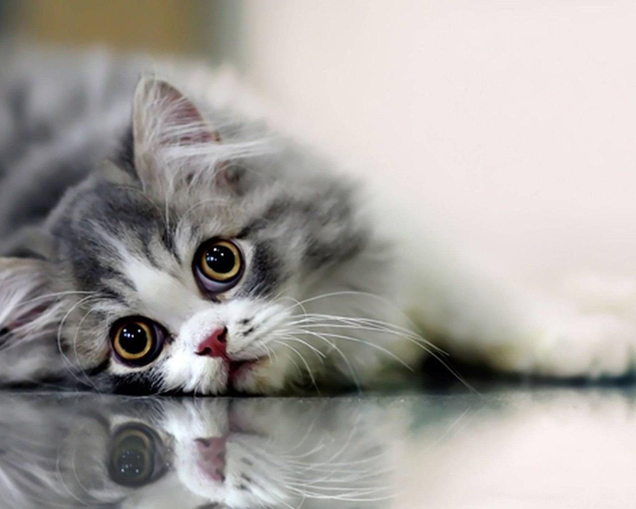 Beautiful Cat Wallpapers Hd Pictures Desktop Background