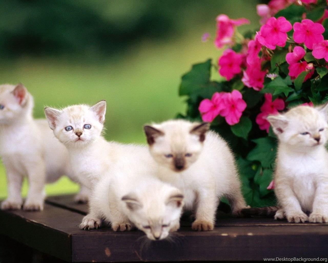 Wallpaper Cute Babies Hd Wallpapers: Cute Baby Animal Hd Wallpapers Desktop Background