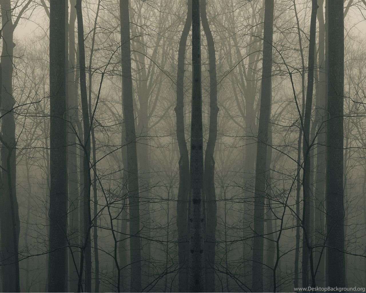 Download Creepy Forest Wallpapers For Mac Desktop Background