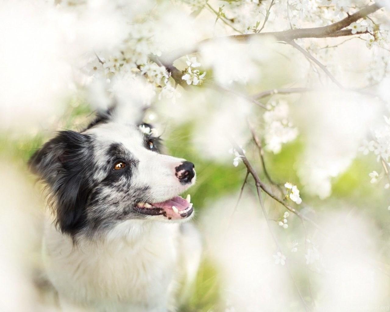 cool animals, dog desktop images, download dog wallpapers, free