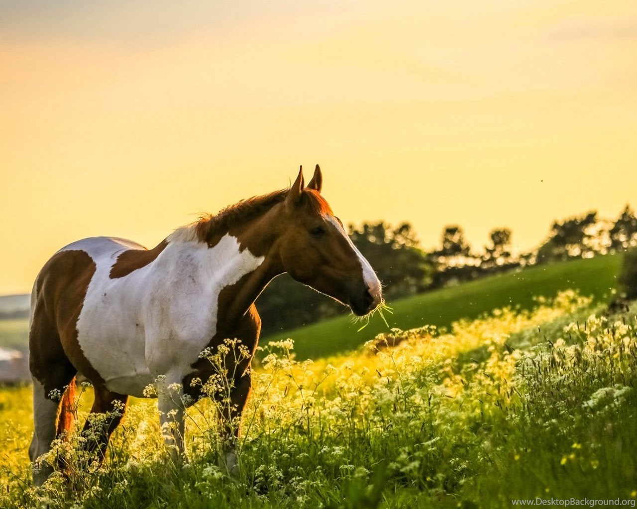 Beautiful Horse Wallpapers Hd Free Download In Widescreen