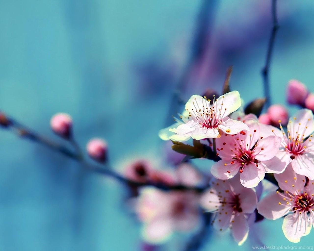Most Beautiful Flowers Images Download Desktop Background
