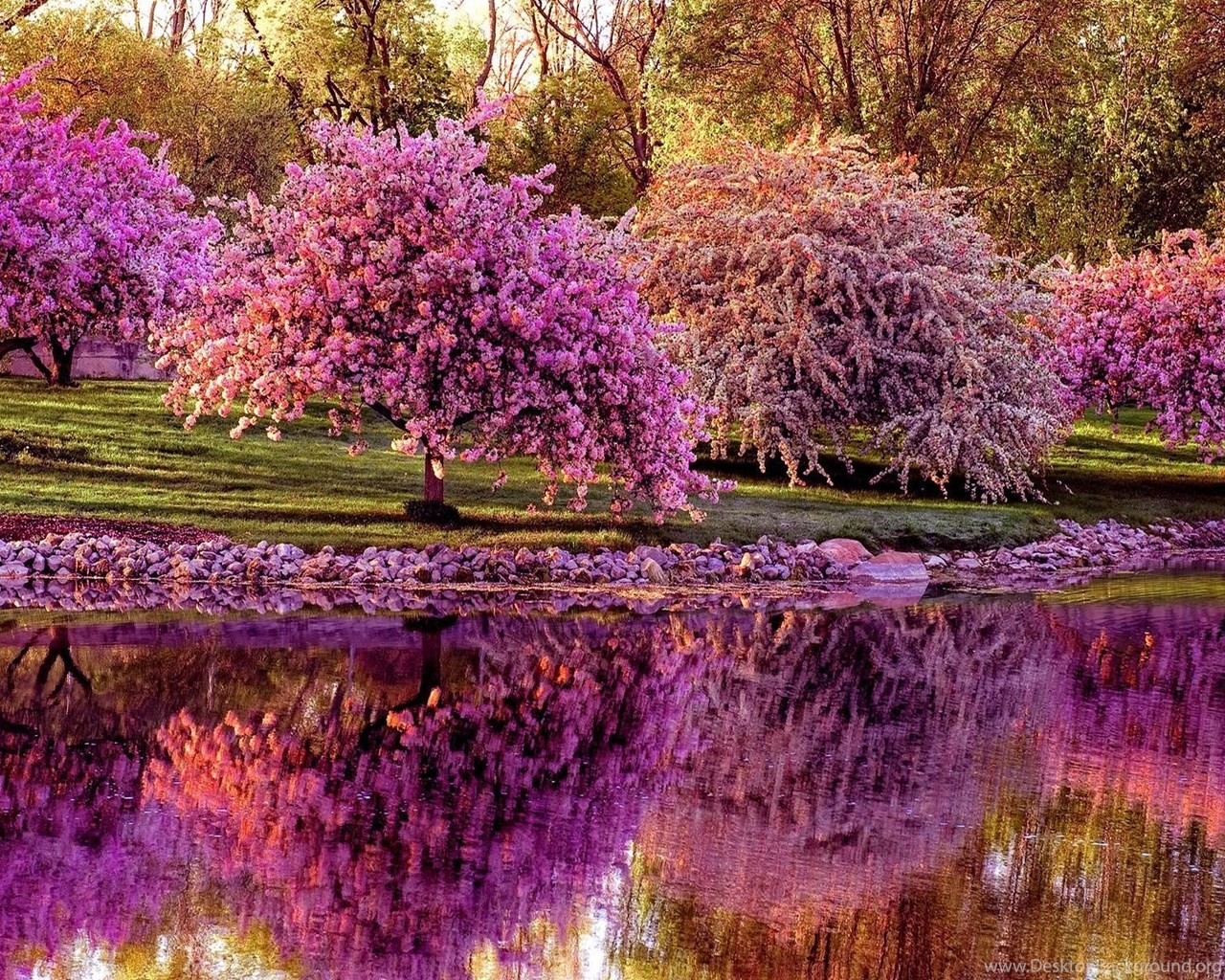 Spring Trees And Flowers Wallpapers Desktop Background