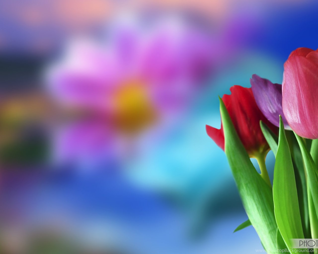 Beautiful Flower Wallpapers For Desktop Animated Background