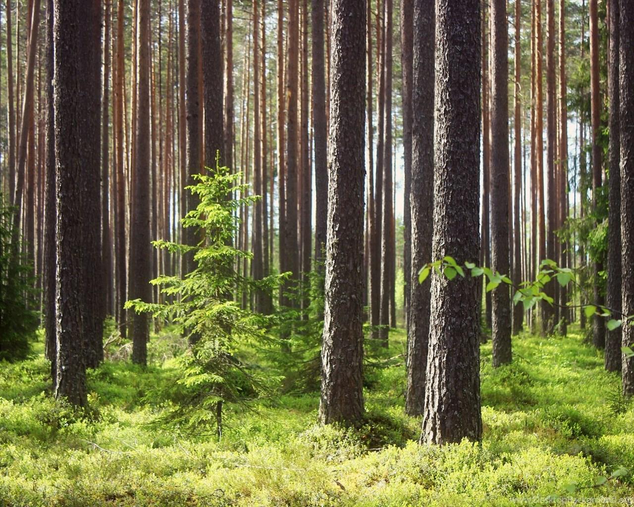 wallpapers green forrest forest 1920x1080 desktop background