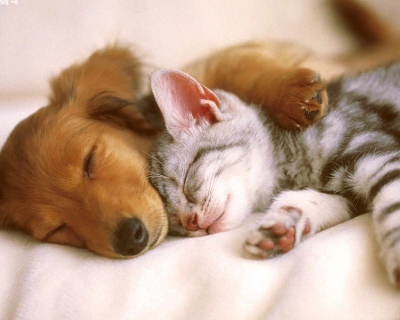 Cute Dog And Cat Wallpapers Desktop Background