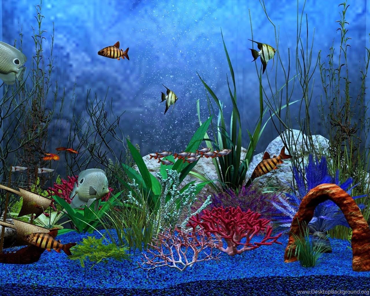 Download Every Iphone Live Wallpaper Live Fish Iphone: HD Aquarium Fish Tank Computer Wallpapers Full Size