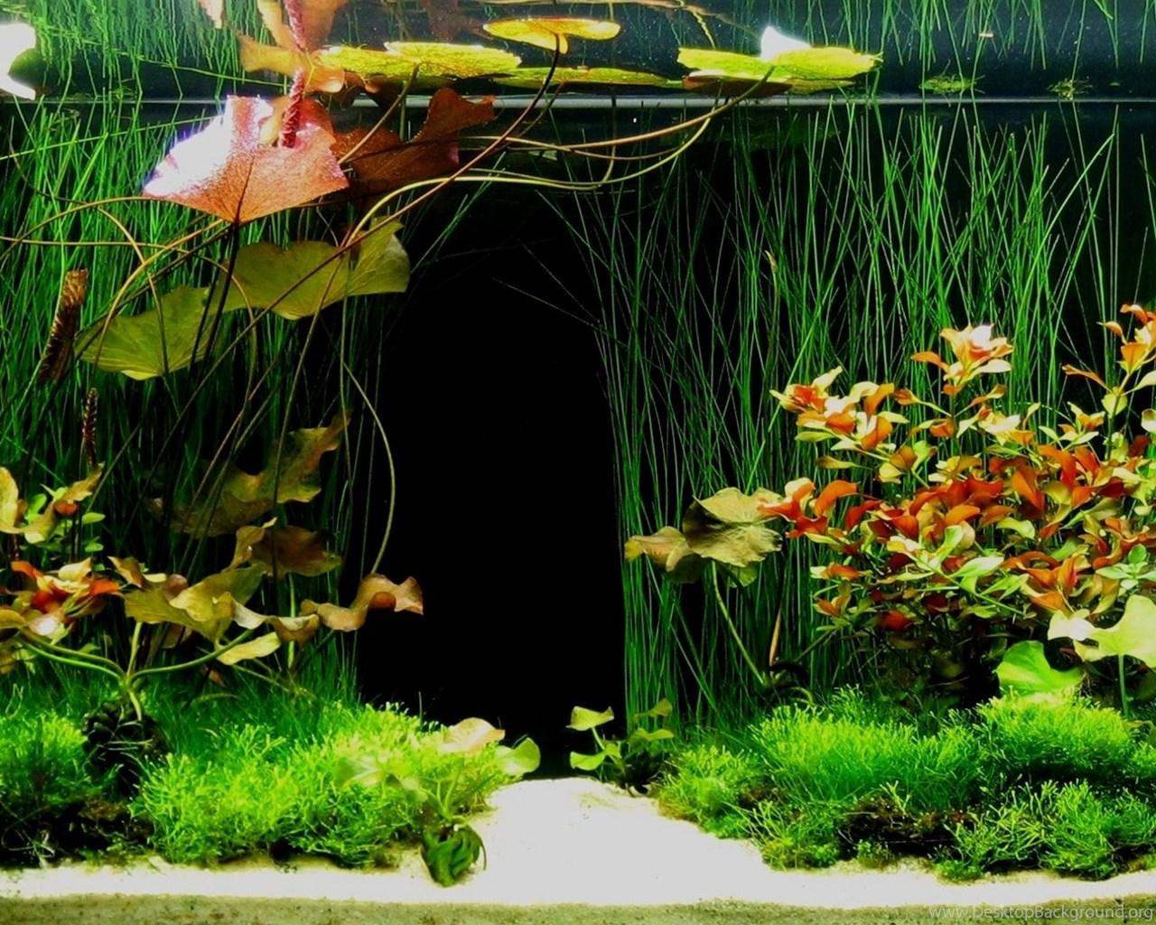 HD Aquarium Fish Tank 1080p Wallpapers Full Size ...