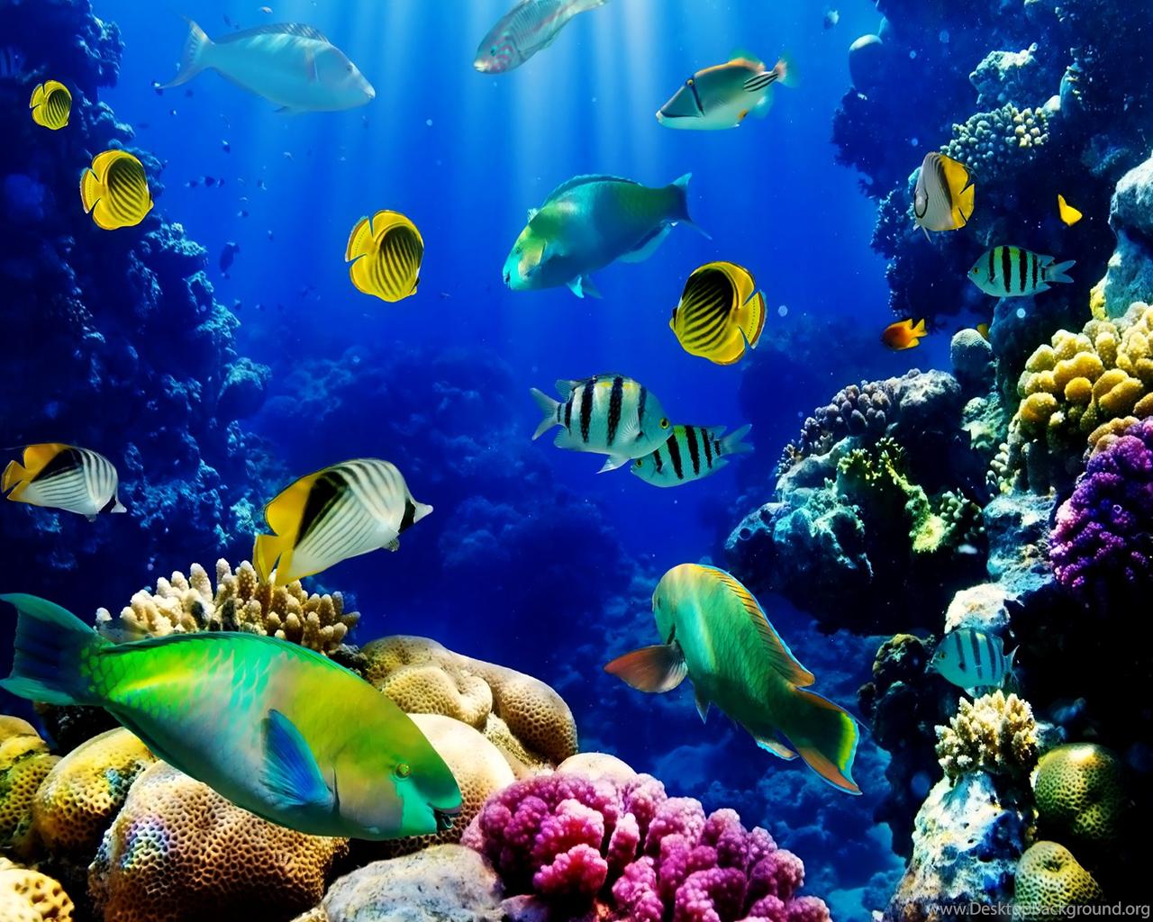 3d Live Fish Wallpapers Tank Wallpaper