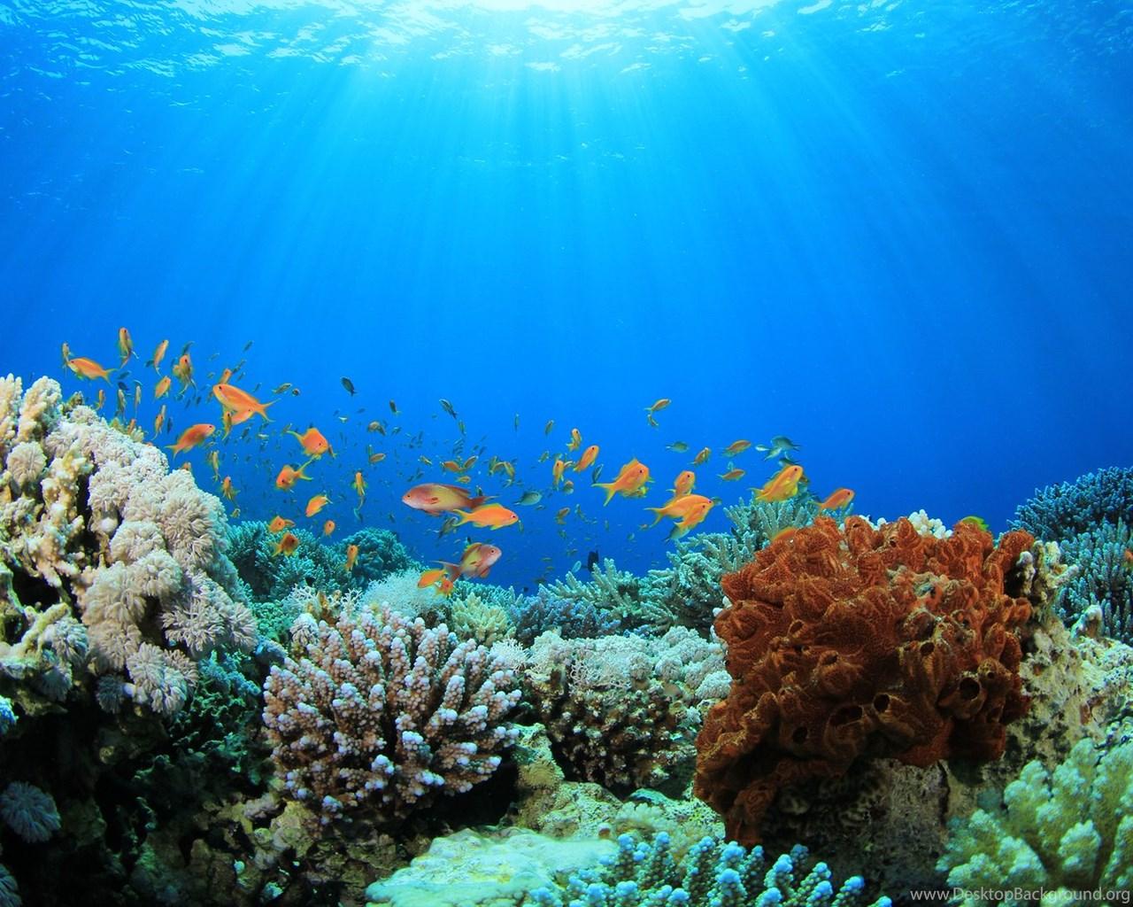 computer coral reef wallpapers desktop backgrounds
