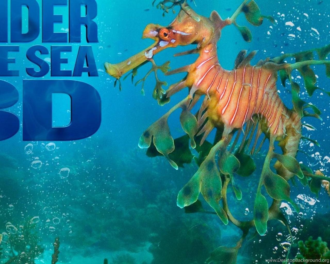 Under The Sea 3d Hd Wallpapers Desktop Background