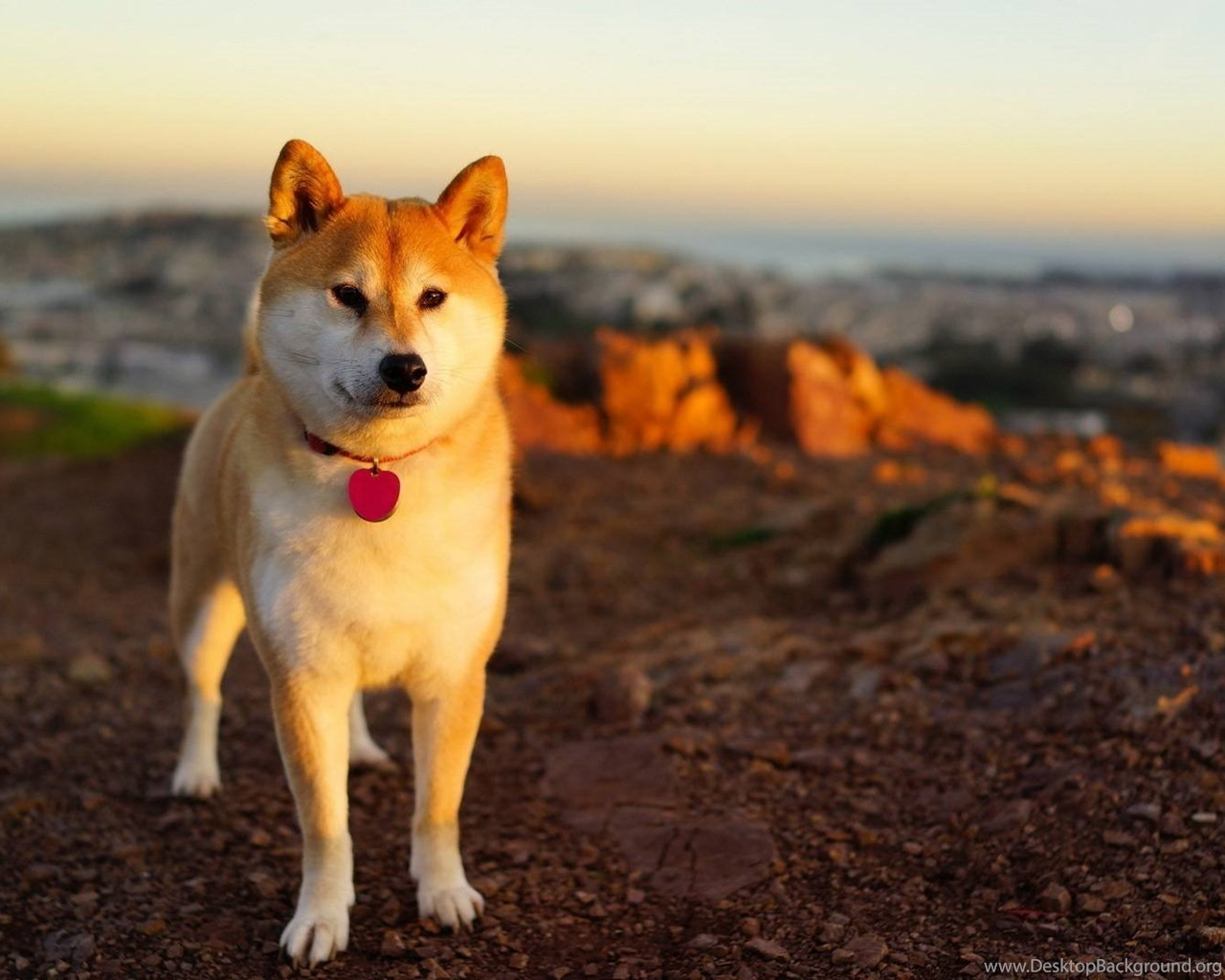Shibe On Beach Doge Wallpapers 1920x1080 72386 Desktop Background