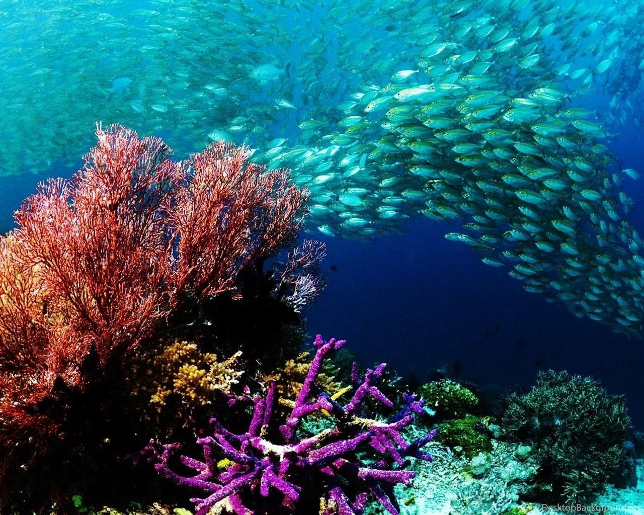 Underwater Ocean Wallpapers Hd Resolution Desktop Background
