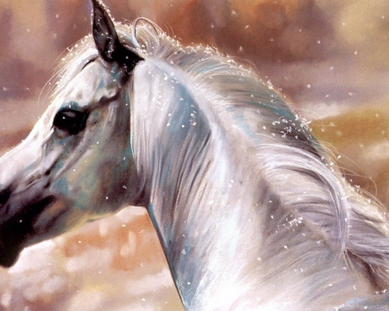 Horses White Horse Fantasy Horses Animals Nature Hd Pictures For Desktop Background