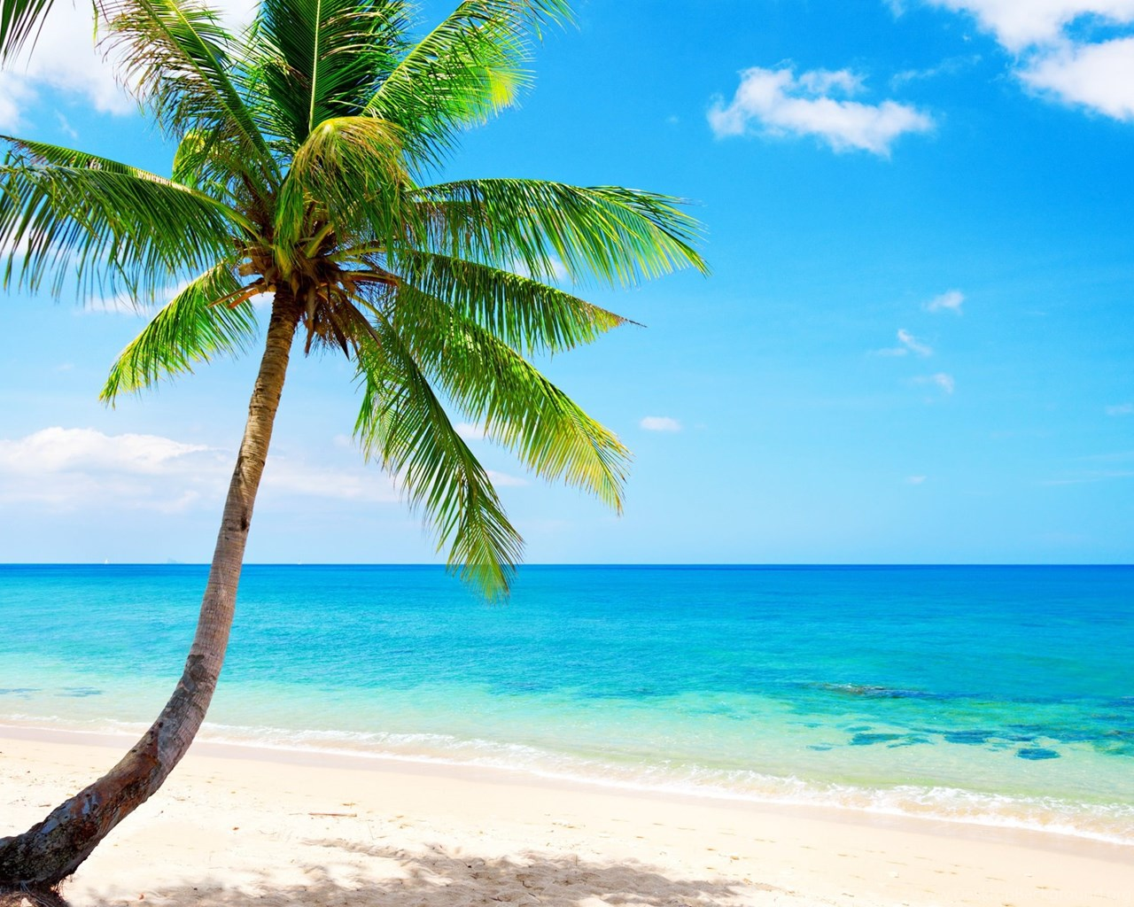 Lonely Palm Tree, Tropical, Beach, Coast, Sea Wallpapers