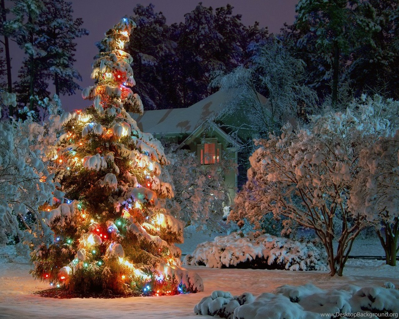 Christmas Tree In The Snow And Lights Wallpapers Images