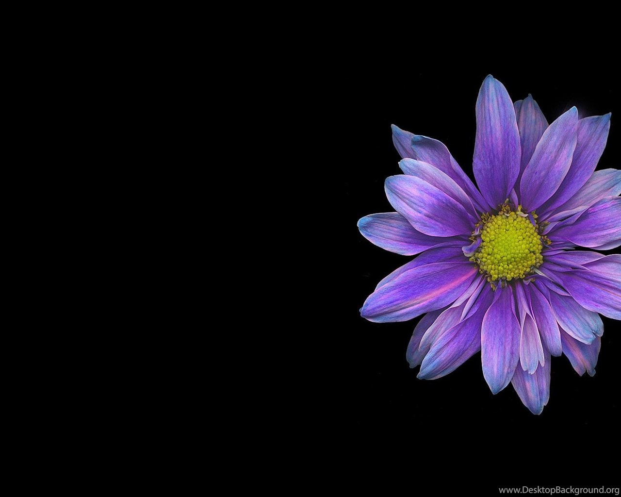 Single Flower Wallpapers: Single Flower Wallpapers Wallpapers Cave Desktop Background