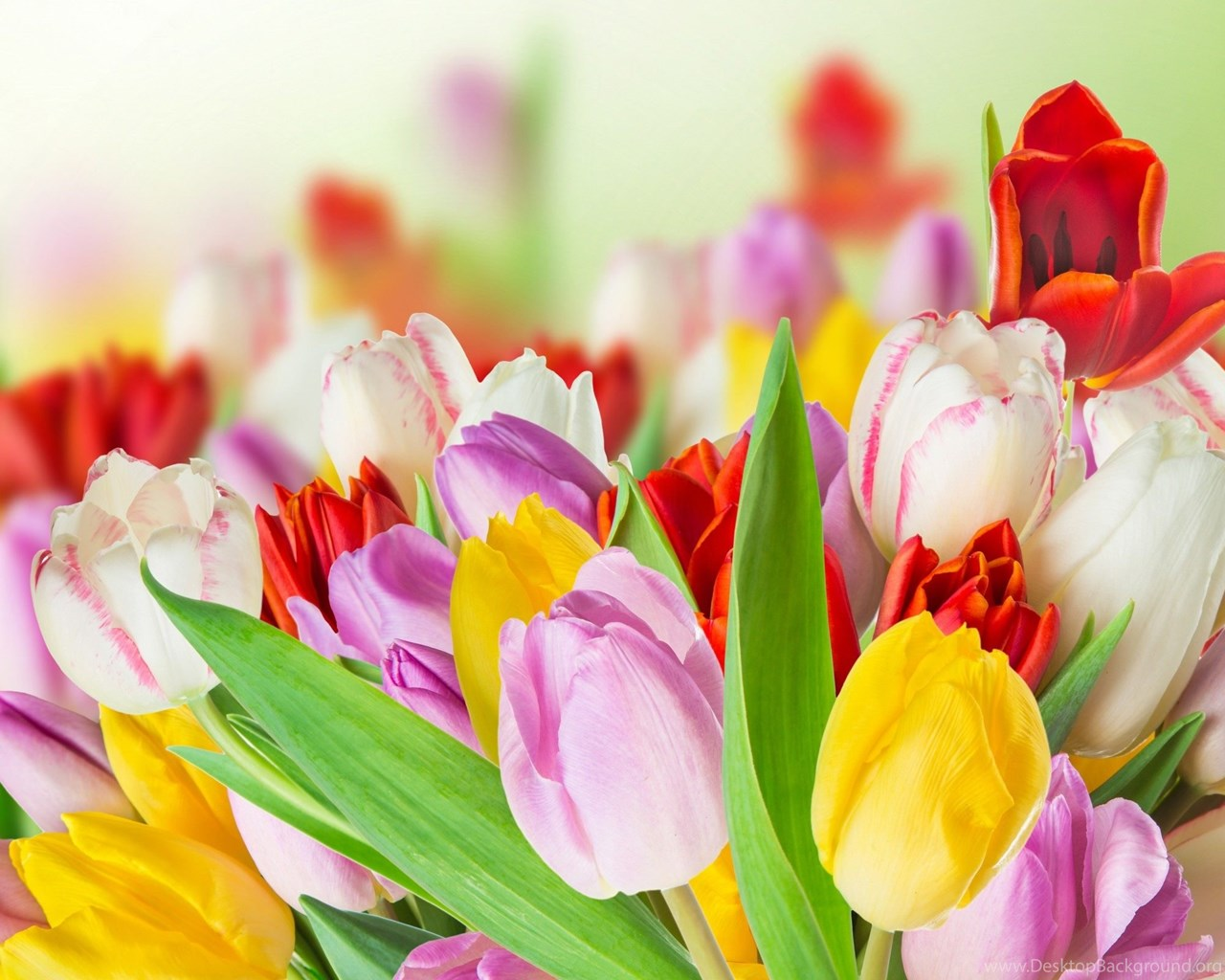spring beauty colorful flowers wallpapers hd download