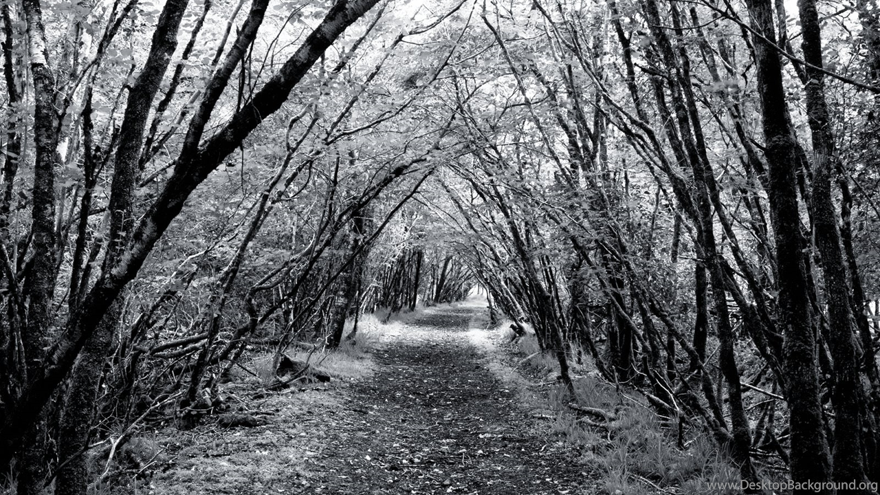 Rossacroo-na-loo Wood, Near Kilgarvan, County Kerry, Ireland  № 12762 без смс