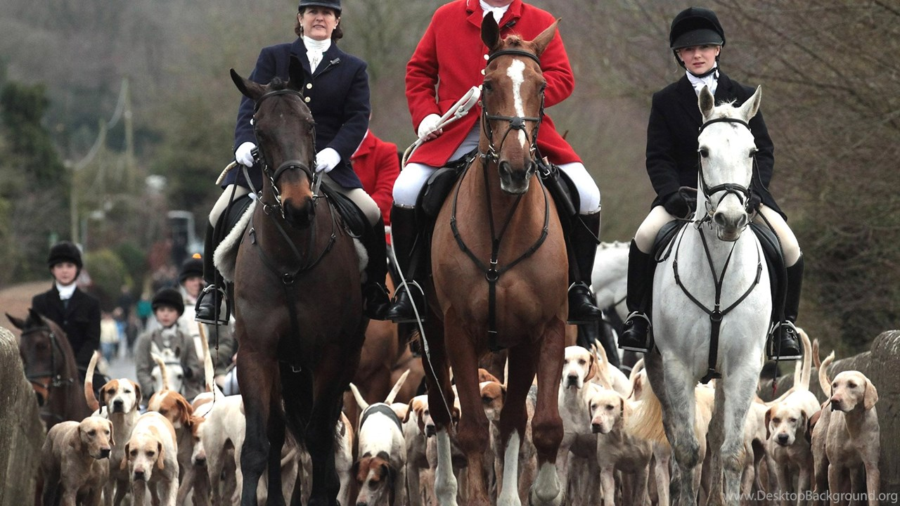 the controversy surrounding the bloody sport of fox hunting