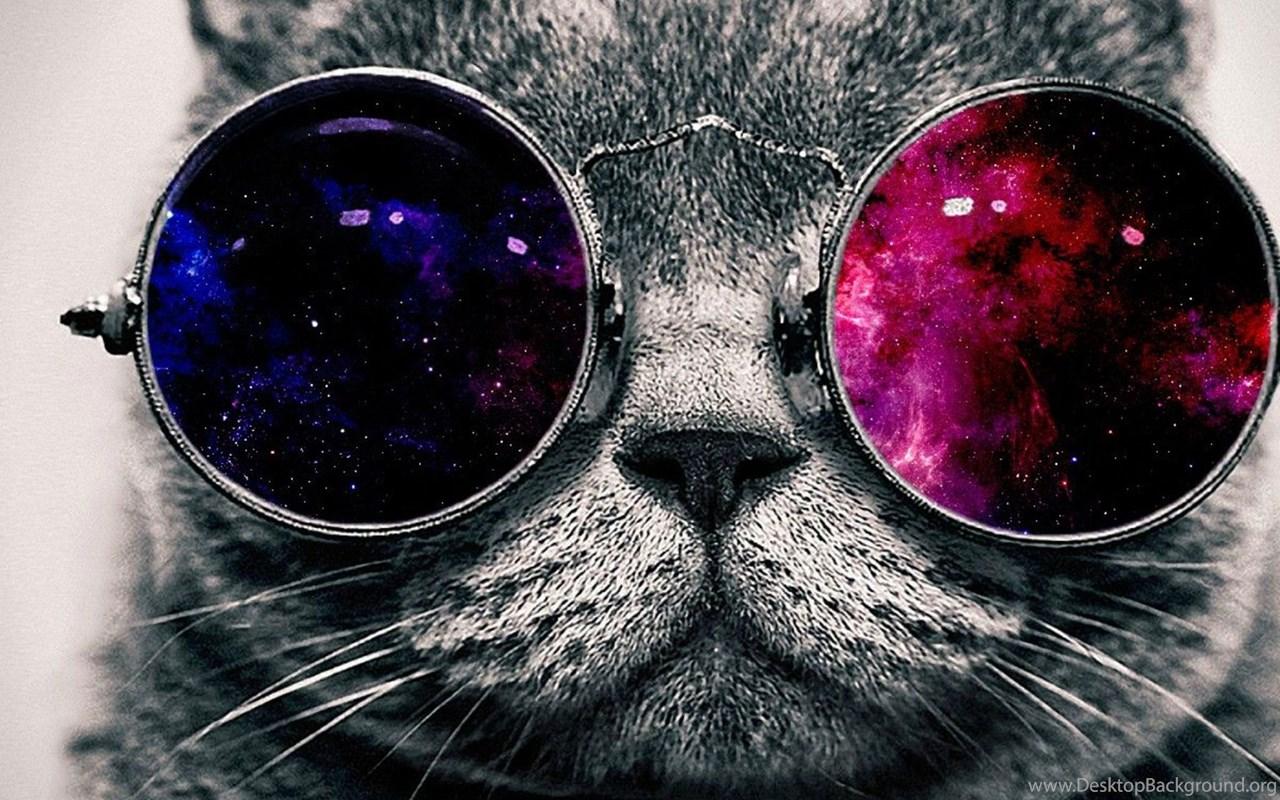 обои на телефон с котиком в очках еревана
