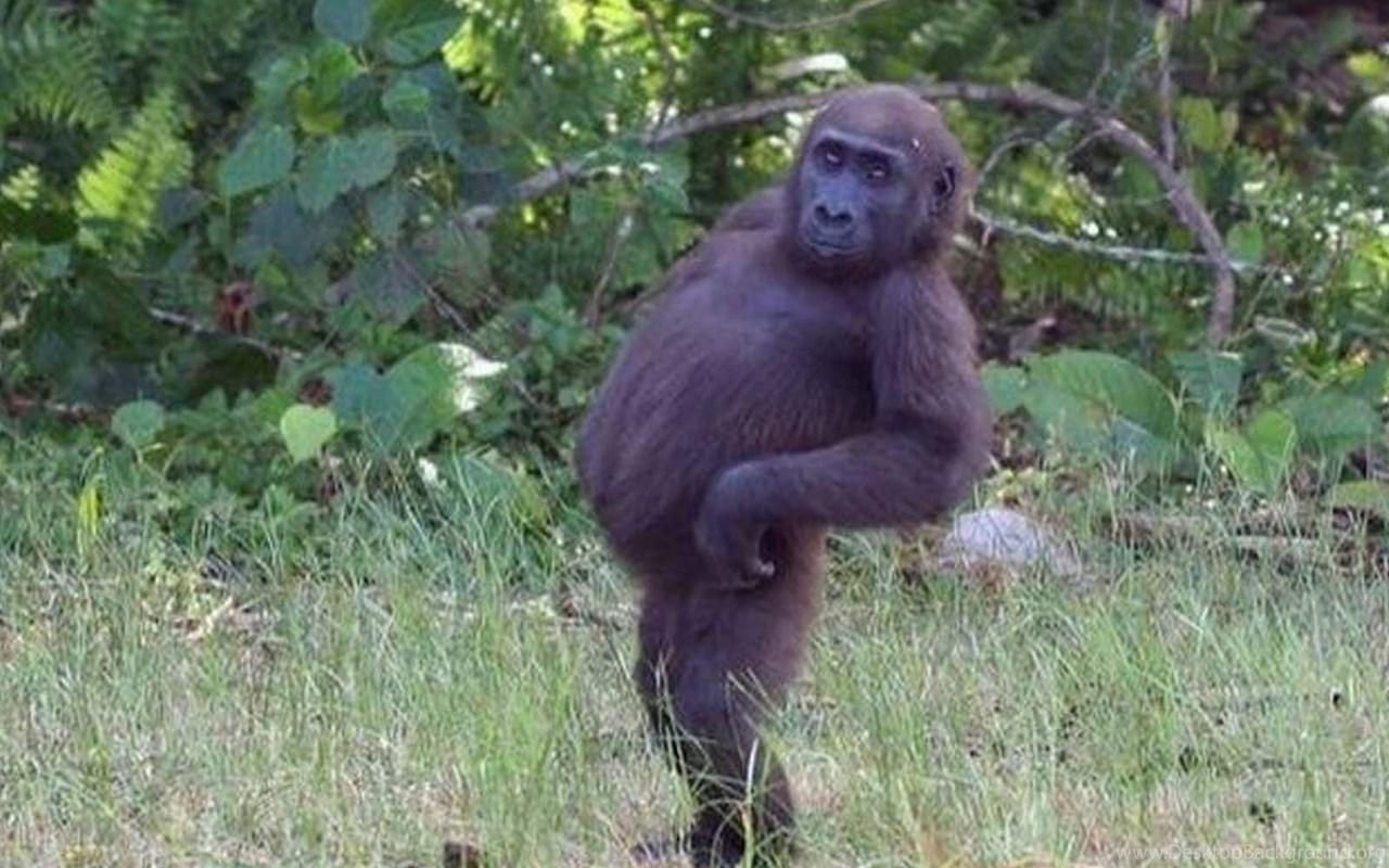 Фото обезьян на аву