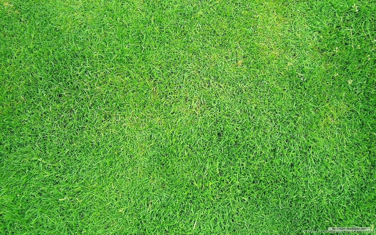 grass texture hd cartoon widescreen 35 seamless amp hd grass textures for designers design