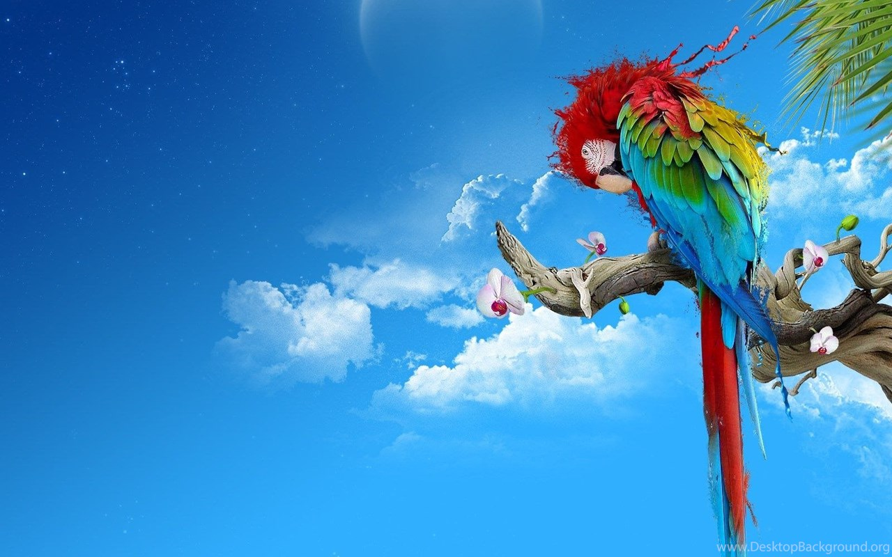 Desktop Images Of Parrots To Color Wallpapers 3d Hd Pictures